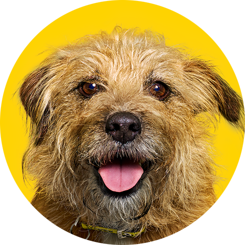 Don't be dogfished | Dogs Trust