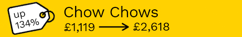 Chow Chow puppy prices