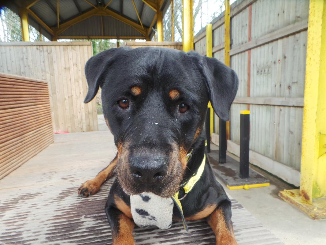 New dog listed for rescue at the Dogs Trust - Glasgow - Tia