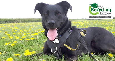 Bracken from Dogs Trust Leeds