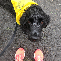 Dog in Dogs Trust bandana with runner