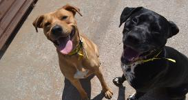 Dogs Trust Sound Therapy For Pets