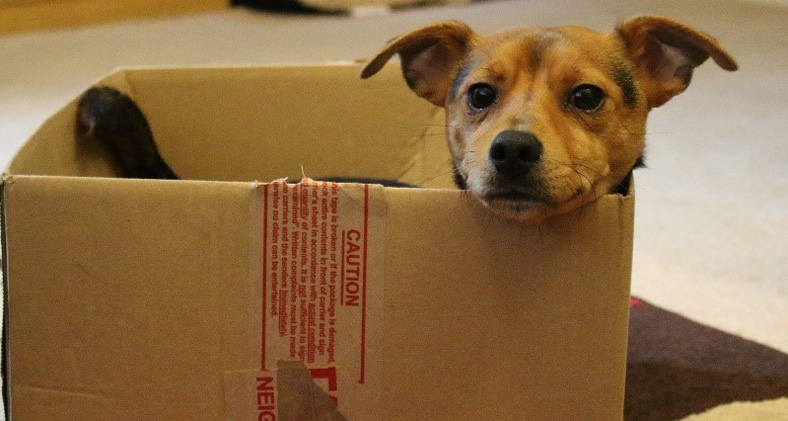 A dog in a cardboard box