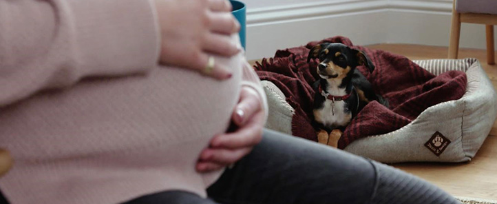 Dog in focus with baby bump foreground