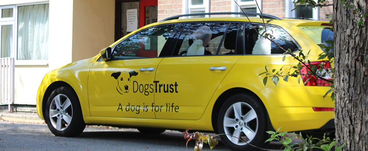 Dog School car