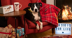 Dog on a chair in front of a fireplace and some christmas presents