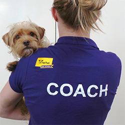 Dog School Coach with a dog