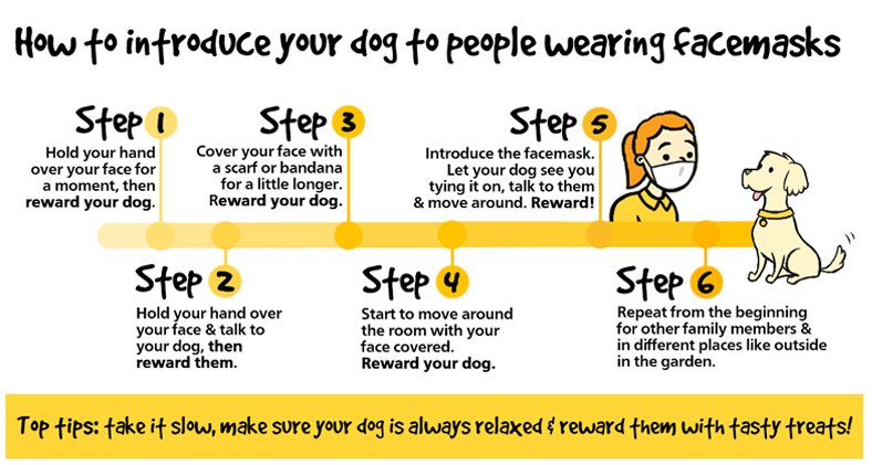 An infographic on how to train your dog to be ok around face masks