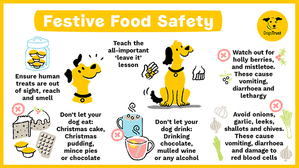 Festive food safety for dogs