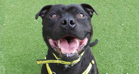 Sound Therapy & Firework Training for Dogs | Dogs Trust