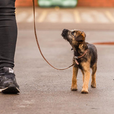 Puppy going for a walk