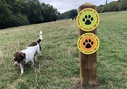 Dog Fouling | Dogs Trust