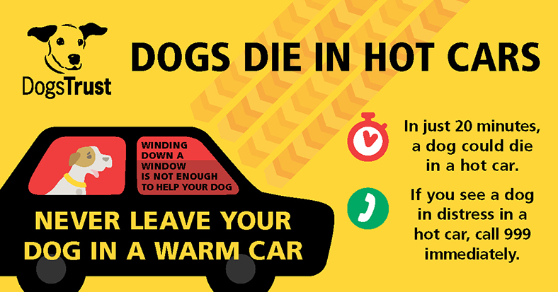 Safe Heat Safety Cruelty 3x5 inch Oval Dogs Die in Hot Cars Sticker