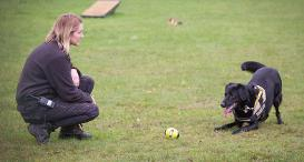 Labrador Keano with Canine Carer Amy