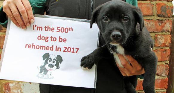 dogstrust.org.uk - Dogs Trust Darlington rehomes 500th dog of the year