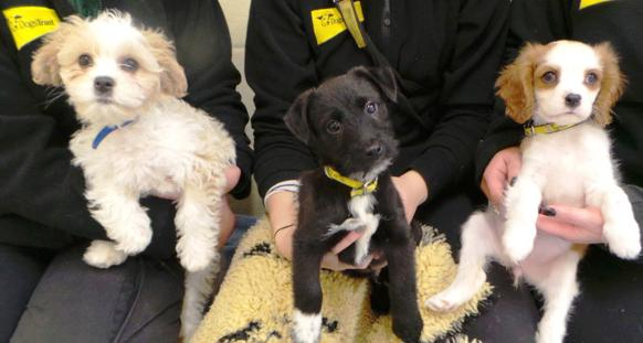 Dogs Trust Puppies For Rehoming