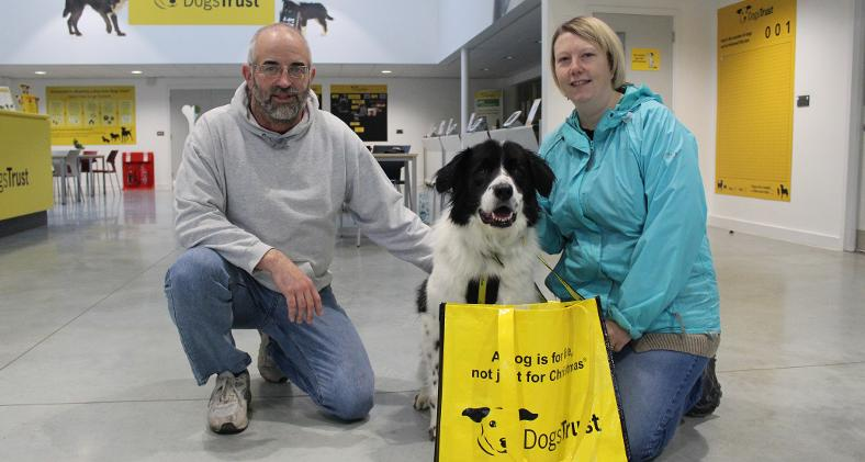 Dog Rescue Centres Gloucestershire