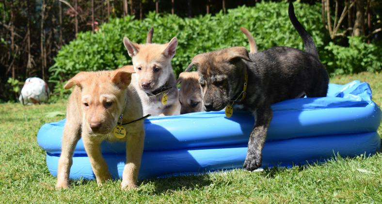 Dogs Trust Glasgow Puppies
