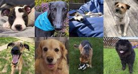 A collage of eight happy dogs