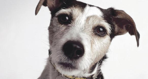 Dogs Trust Ilfracombe To Host 125th Anniversary Ball