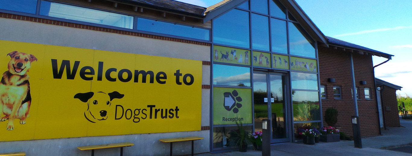 Dog Rehoming, Rescue & Adoption Shelter Leeds   Dogs Trust