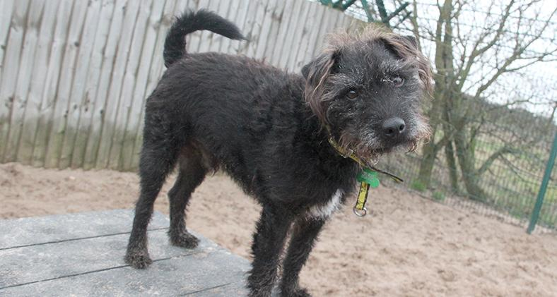 Billy the Terrier Cross at Dogs Trust Leeds