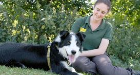 Jasper the Border Collie at Dogs Trust Leeds