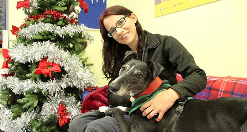 Jasper with a Christmas tree and a Canine Carer