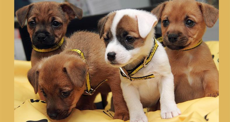 Leeds Pups Hope They Become Hollywoof Winners Dogs Trust