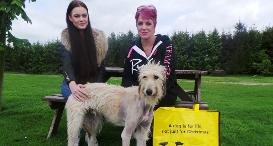 Olympups Rio Lise Dream Of New Home Dogs Trust