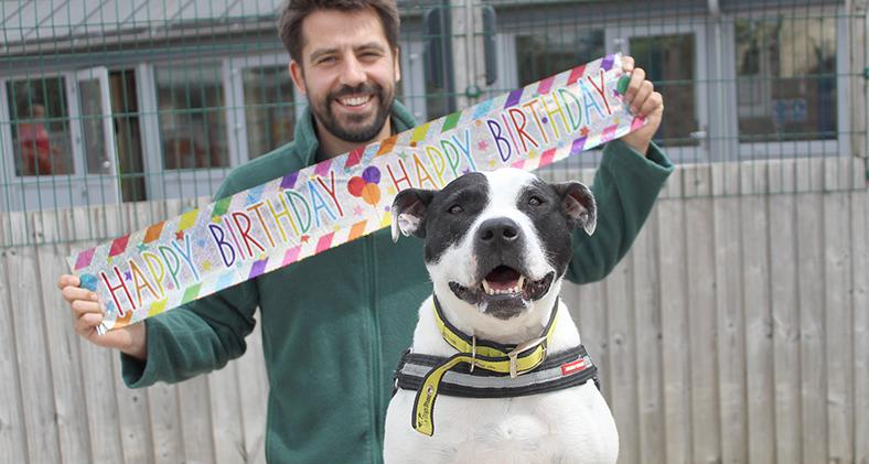 Staffy Tia celebrating her 6th birthday at Dogs Trust Manchester
