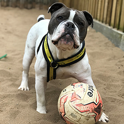 Bodhi at Dogs Trust Manchester