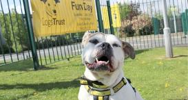A resident at Dogs Trust Manchester helping to promote the Fun Day.