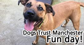 Dog Rescue Centres Greater Manchester