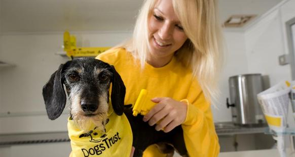 Free Neutering For Dogs Manchester