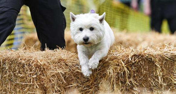 Dogs Trust Manchester Fun Day