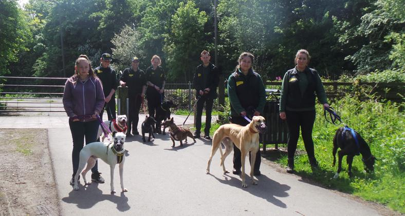 Dogs Rescue Centres Merseyside