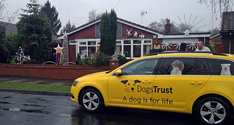 Lights for Dogs Trust