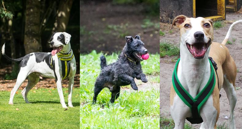 Three dogs that have been rehomed