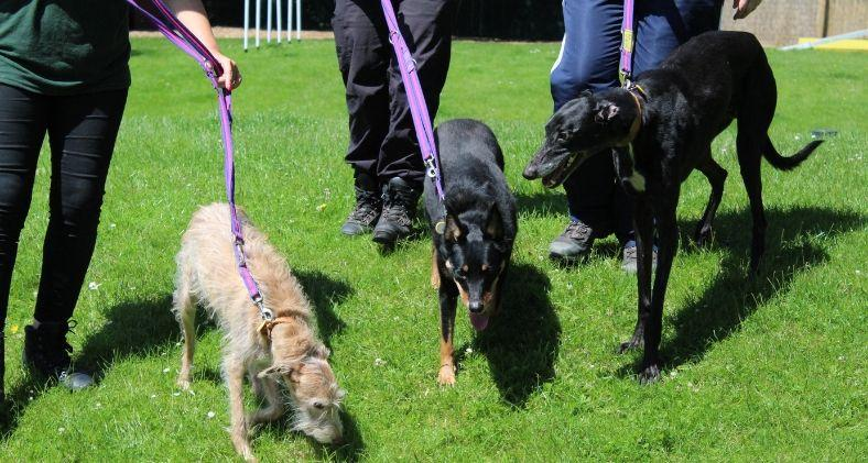 Trio of dogs at Dogs Trust Merseyside