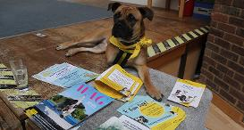 Bambi the Supporter Relations Dog from Dogs Trust Newbury