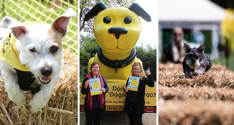 SRO and Temporary Events Assistant with Dogzilla at Dogs Trust Newbury