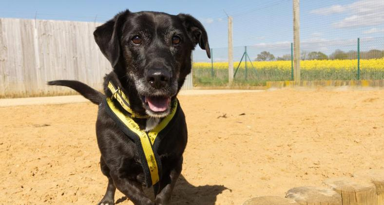 Birthday celebrations for veteran rescue pooch | Dogs Trust