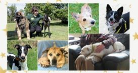 A collage of dogs from Dogs Trust Shoreham