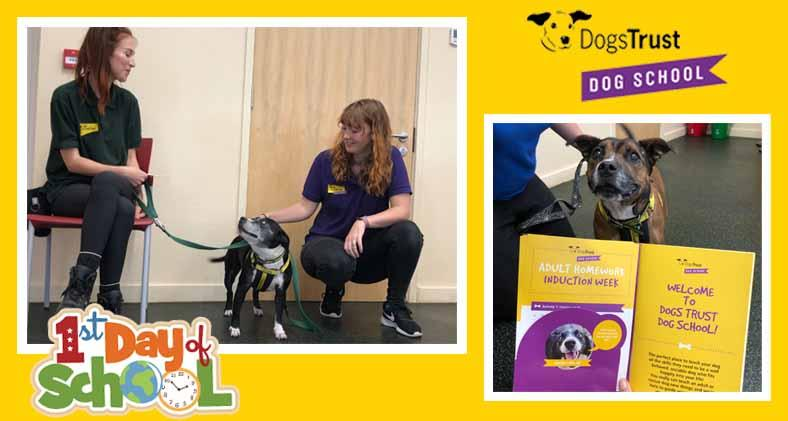 Staffies Honey & Roxy ace their first day at Dog School