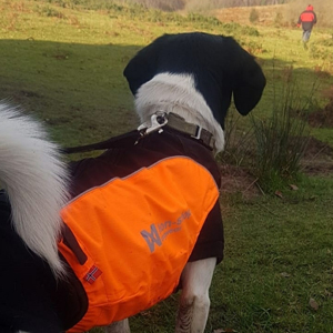 Rafi the search rescue dog