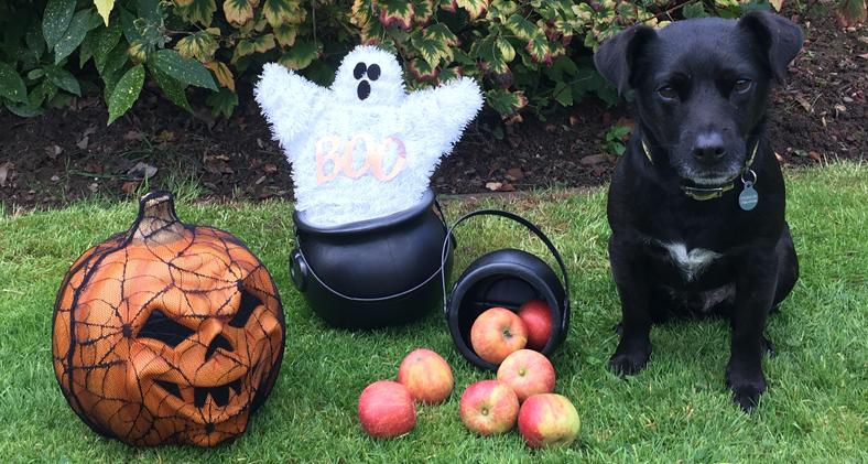 A dog with halloween decorations
