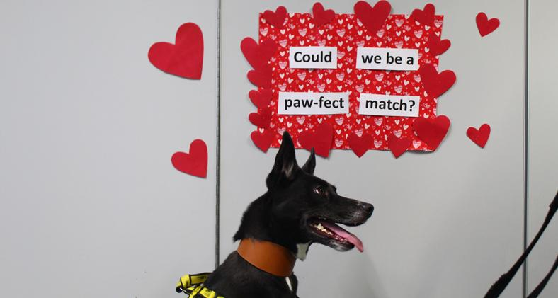 Ruby, a Lurcher in front of a valentines message