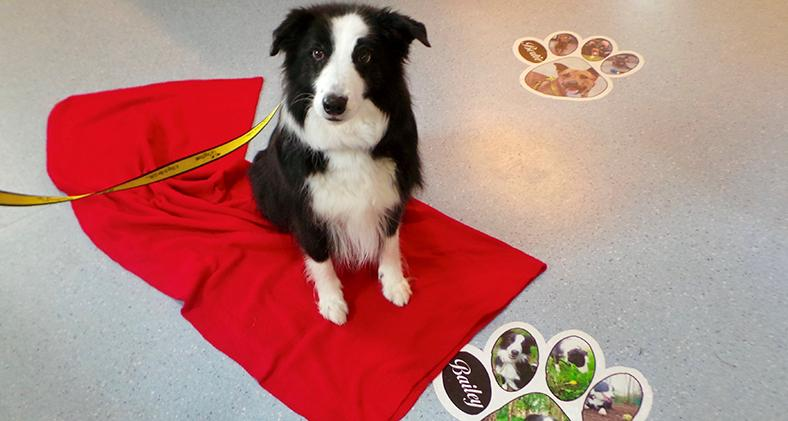 Bailey the Border Collie at Dogs Trust West Calder