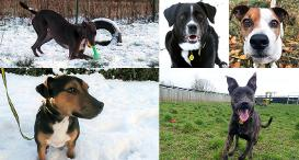 Collage of dogs in the snow